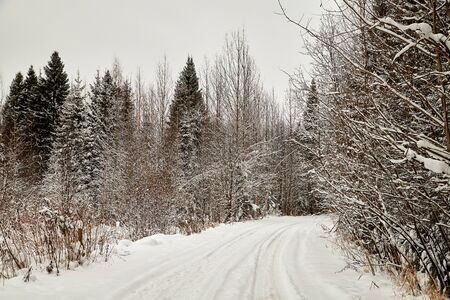 Snow covered trees in a winter forest and white road between them. White landscape in a cold day
