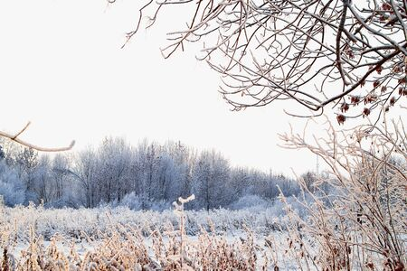 Snow covered trees in a winter forest. White landscape in a cold day Stockfoto
