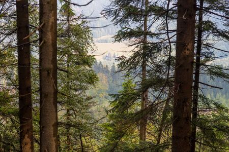 Pine forest in the mountains and a view of the valley far below through the trunks and branches of trees in a summer or autumn day. Stockfoto