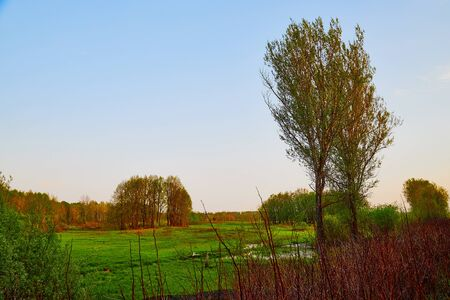 Nature landscape with field, water of lake or swamp and big tree on the foreground in a summer or autumn evening Archivio Fotografico - 136980571
