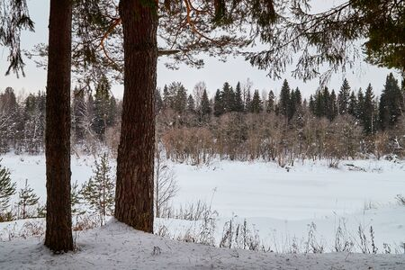 Trees in a winter forest and wnow arround. White landscape in a cold day Archivio Fotografico - 137327992
