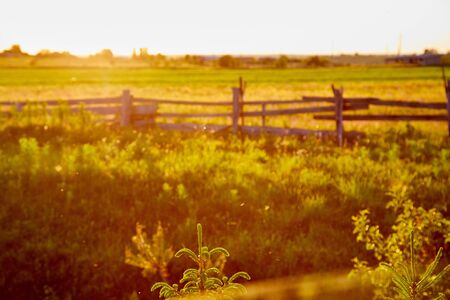 Countryside in with a meadow, field and a fence with wooden poles and posts in the evening during sunset. Rural and rustic landscape in Russia