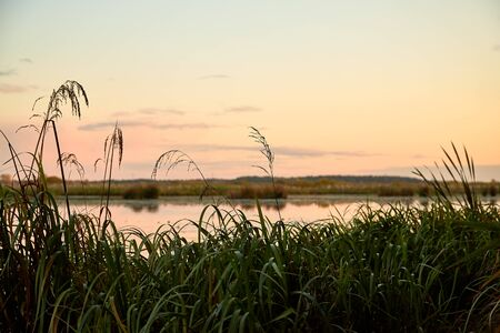 View from coast throught green grass on foreground on a water of lake, pink sunset, blue sky and white clouds at a evening time Фото со стока