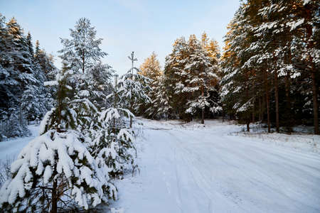 Snowy Road going through a winter forest in a cold day Stockfoto