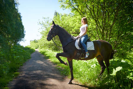 Slim girl and a brown horse in a Park on a Sunny day and green trees in the background. Young woman rides a horse