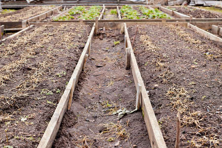 Freshly prepared raised vegetable bed on allotment in rural place
