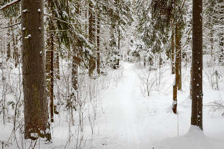 Snow covered trees in forest in winter day Stockfoto - 168422341