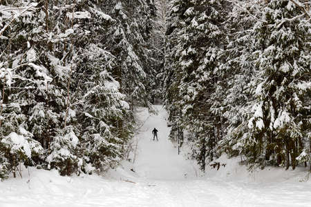 Beautiful snow-covered forest with trees and skier Stockfoto - 168422496