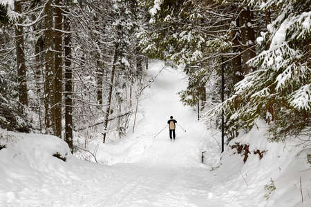 Beautiful snow-covered forest with trees and skier Stockfoto