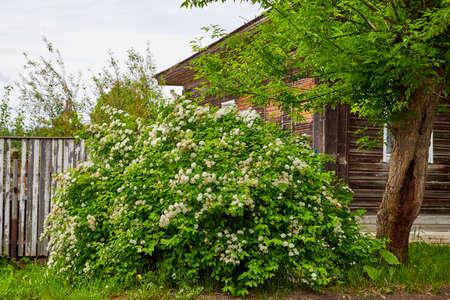 Antique wooden village in Russia in summer day