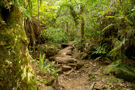Trails in reunion island, Africa photo