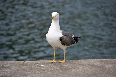 Seagull Portrait photo