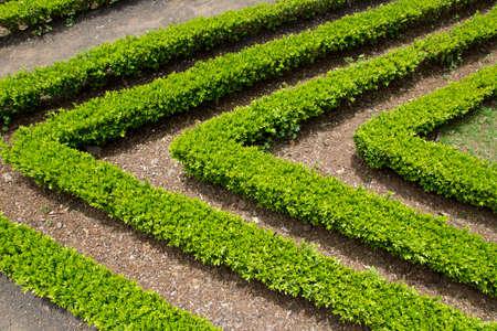 Decorative green park - Botanical garden Funchal, Madeira photo
