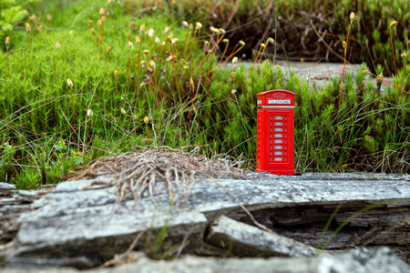 Red phone booth in the moss photo