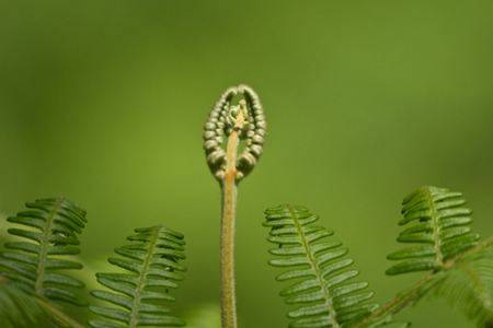 Abstract Fern photo