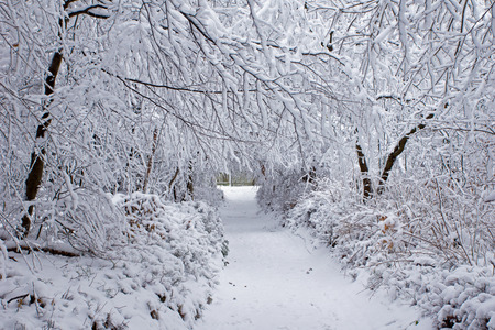 Winter forest in snow photo
