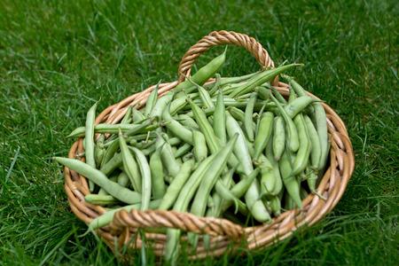 Green Bean Basket photo