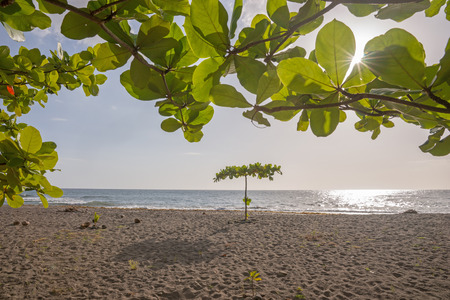 dominica: Lonely tree on tropical beach of Dominica