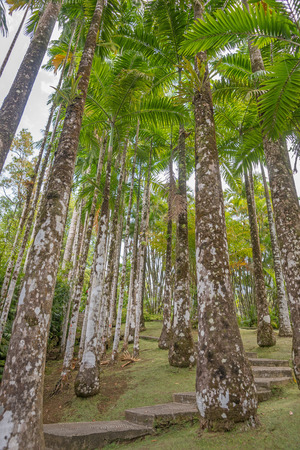 Tropical palm grove on the Iceland of Martinique photo