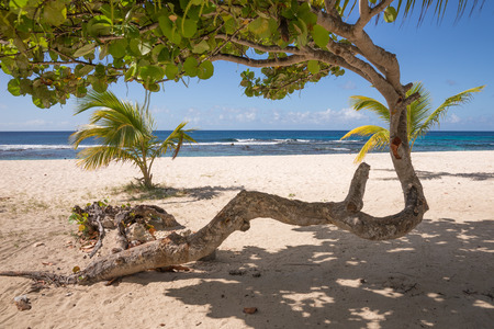 Abstract tree on tropical beach of Guadeloupe