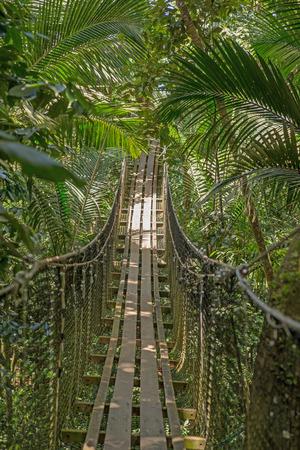 bridge in nature: Suspension bridge in the forest Stock Photo