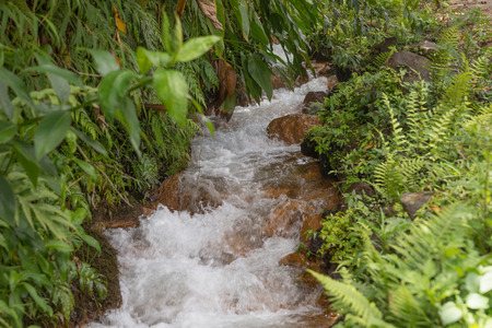small river: Small river in forest Stock Photo