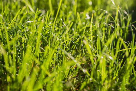 light green: Background of green grass in sunlight