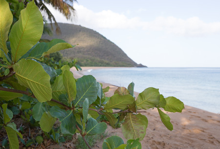anse: Beach of Grande Anse in Deshaies, Guadeloupe