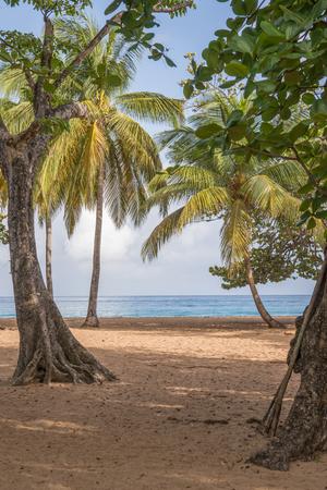plage: Caribbean beach in Guadeloupe, Plage de la Grande Anse in Deshaies