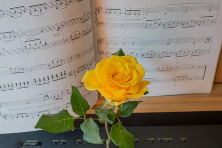 music book: Close up view of piano keyboard with music book and yellow rose