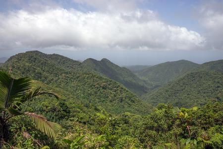 caribbean island: Rainforest and mountains on Caribbean island of Dominica