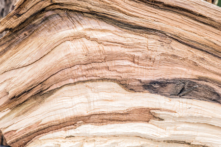 untreated: Untreated wood structure as background texture Stock Photo