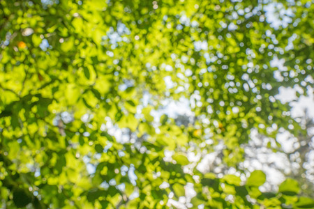 highlights: Shining defocused highlights in trees, nature background Stock Photo