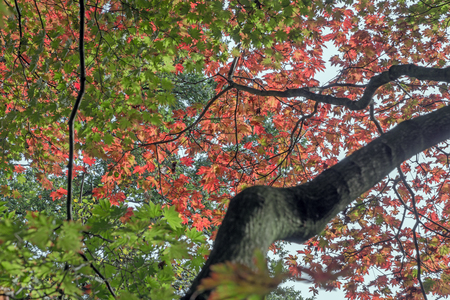 delusion: The various dimensions of leaves in autumn Stock Photo