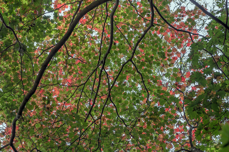 limp: The various dimensions of leaves in autumn Stock Photo