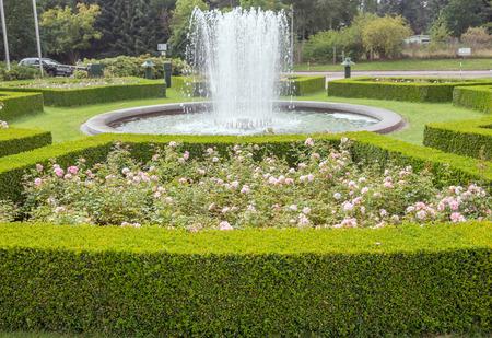 evergreen boxwood (Buxus sempervirens) hedge adorn a rose garden Stock Photo