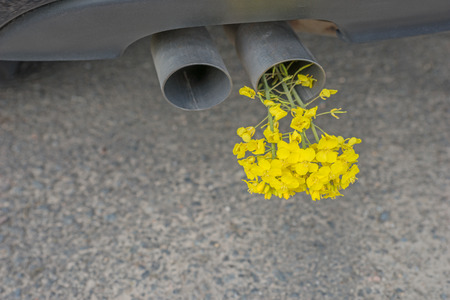 biofuel: Car pipe exhaust, with yellow rape. Conceptual photo of biofuel Stock Photo