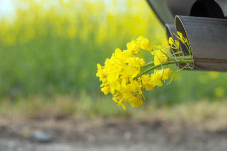 Car pipe exhaust, with yellow rape. Conceptual photo of biofuel Stock Photo