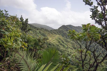 Foresta pluviale e le montagne sull'isola caraibica di Dominica Archivio Fotografico - 61399390