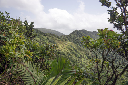 Rain forest and mountains on Caribbean island of Dominica