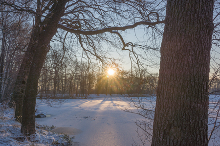 snowscape: Sunset between trees, Sun rays in winter forest