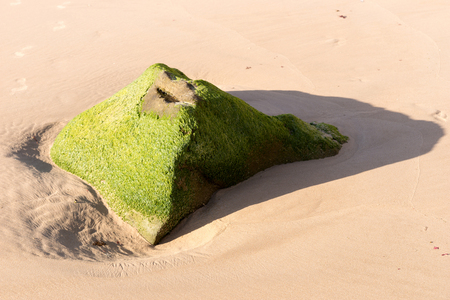 green algae: Beach with stone covered with green algae Stock Photo