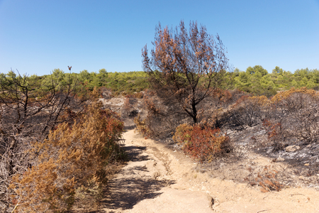 recent: Burned forest after a huge fire of Portugal Stock Photo
