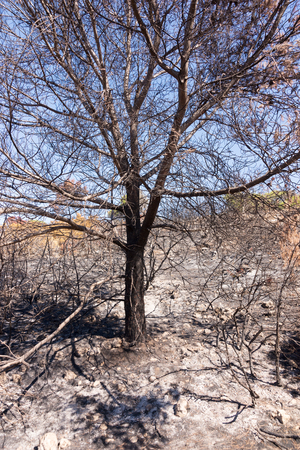 ravaged: Burned forest after a huge fire of Portugal Stock Photo