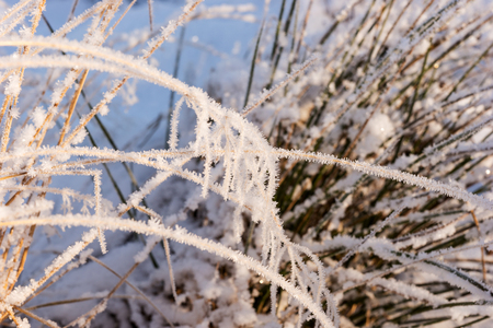 calendario noviembre: Frozen grass, covered with hoarfrost. Winter background Foto de archivo