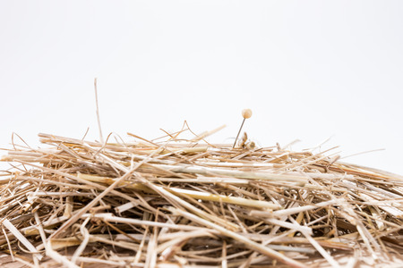 unsolvable: A needle is in the haystack. Proverb for challenge and search Stock Photo