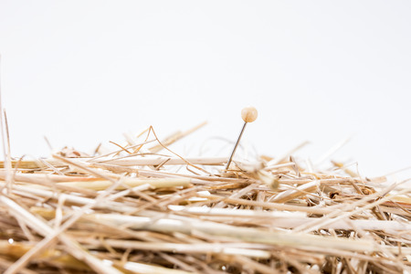 A needle is in the haystack. Proverb for challenge and search Imagens