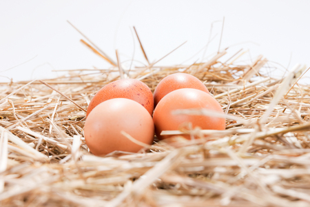Four fresh brown chicken eggs in the straw Stock Photo