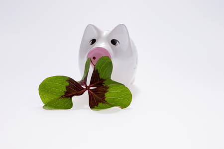 Lucky charm pig with four leaf clover isolated on white