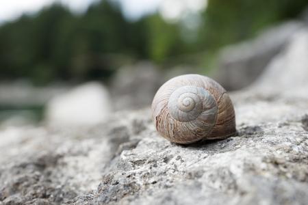 Big snail hides between stones
